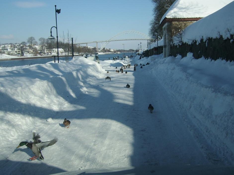 Vinterbilde fra Gamlebyen